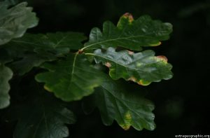 Leaves, The Slade